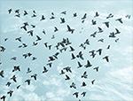 birds flying in arrow formation